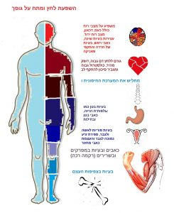 Human Body Clipart & Human Body Clip Art Images - Clipartall pertaining to Body Human - Human Anatomy Diagram